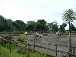 Gamma Horse Stud and Clinic