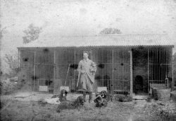 Dog Kennels, Mile House near Scargill, ca 1900