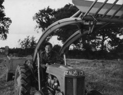 Tom Metcalfe Harvesting at Bellinter, 1956