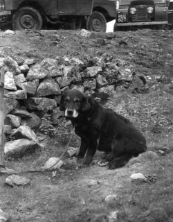 'Russell' on Conistone Moor, 1957