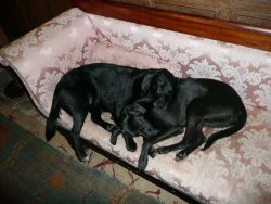 Wally and Franny asleep on the setee at Buckland House, Devon