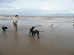 A stroll with the dogs at Bream Sands, Somerset