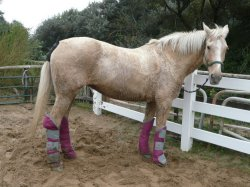 'Kissy' with her boots on at Bream Sands, Somerset